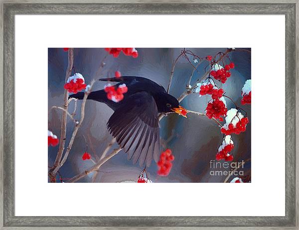 Black Bird In Flight Framed Print