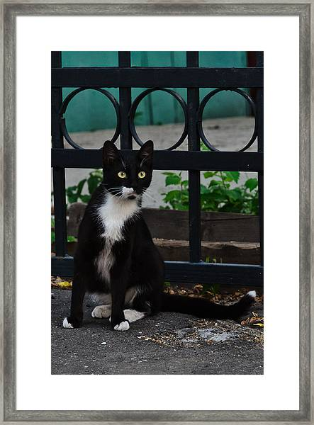 Black Cat On Black Background Framed Print