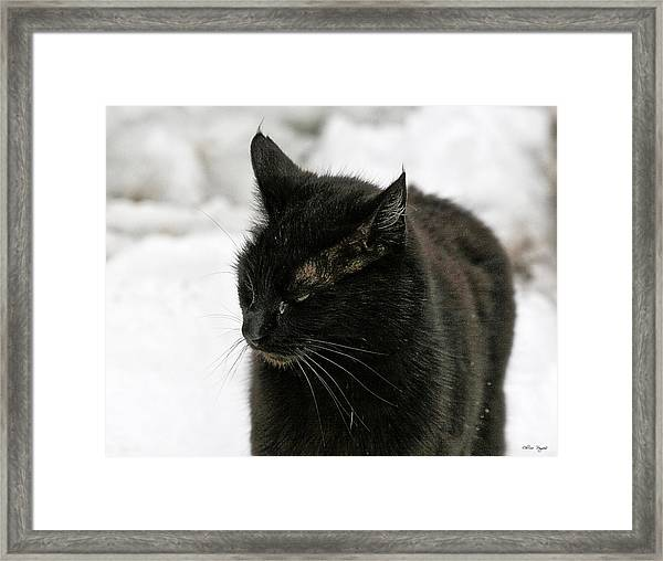 Black Cat White Snow Framed Print