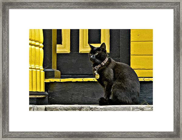 Framed Print featuring the photograph Black Cat Yellow Trim by Williams-Cairns Photography LLC