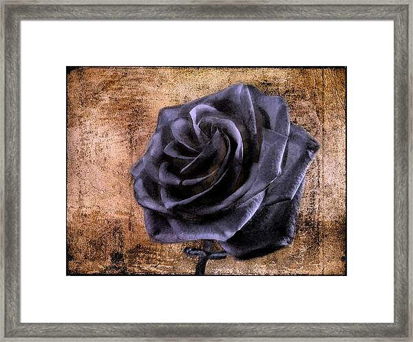 Framed Print featuring the photograph Black Rose Eternal   by David Dehner