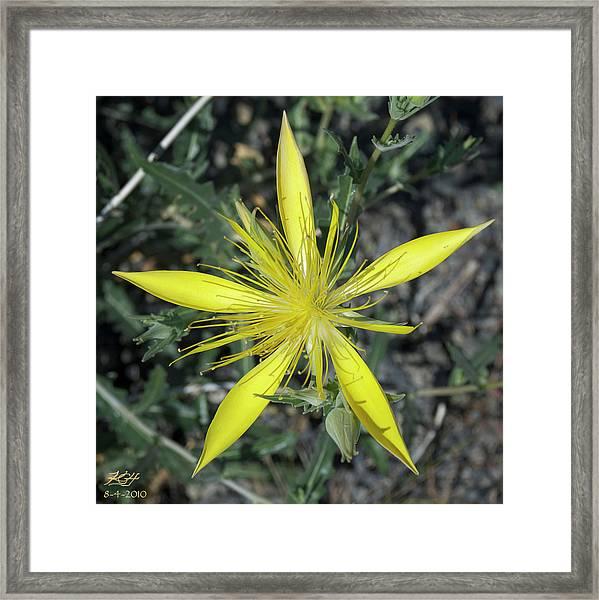 Blazing Star Framed Print