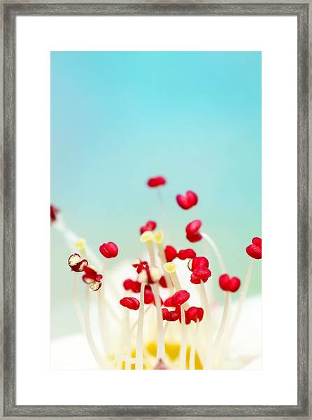 Blooming Candy Red Framed Print