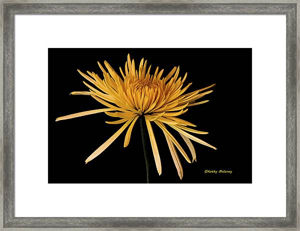 Blooming Yellow Framed Print