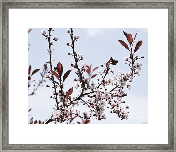 Blossoms In Time Framed Print