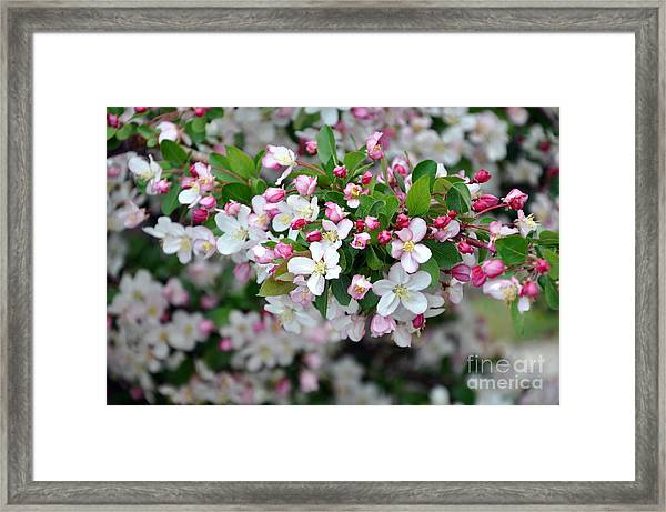 Blossoms On Blossoms Framed Print