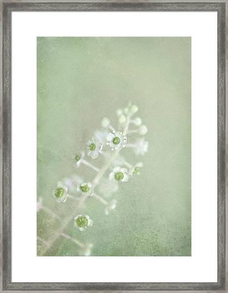 Blossoms Unfolding Framed Print