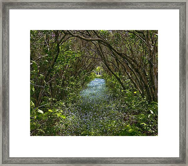 Blue Carpet In The Woods. Framed Print