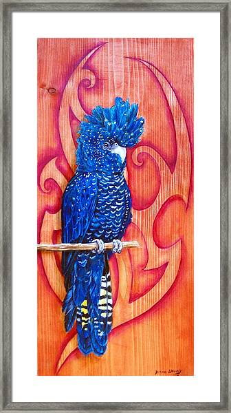 Blue Cockatoo Framed Print by Diana Shively