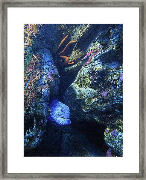 Blue Eel And Shy Friend Framed Print
