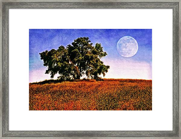 Blue Moon Morning Framed Print by Donna Pagakis