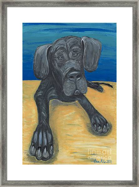 Blue The Great Dane Pup Framed Print