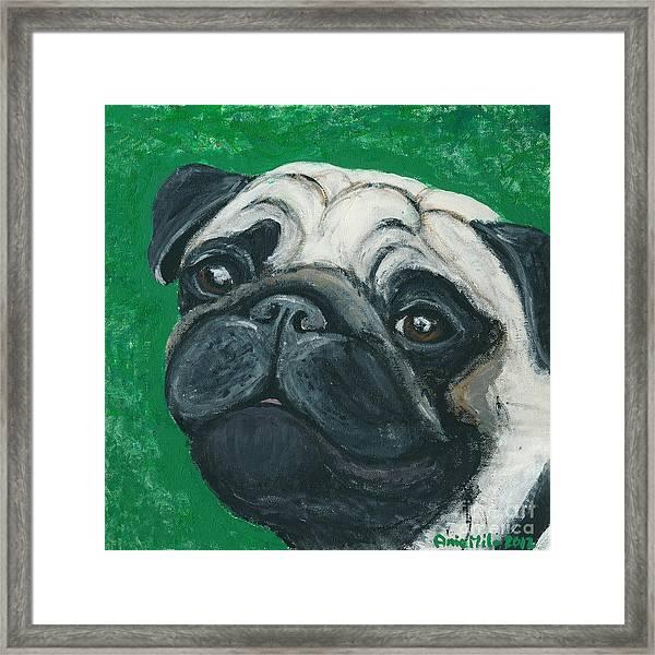 Bo The Pug Framed Print