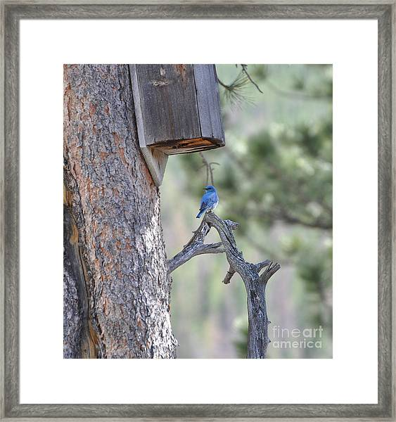 Boy Blue Framed Print