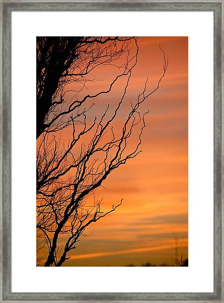 Branches Meandering Through The Sunset Framed Print