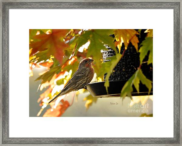 Breakfast With A View Framed Print by Nava Thompson