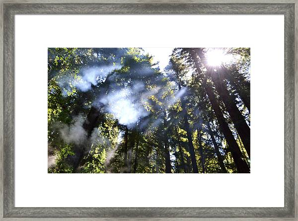 Breaking Through The Trees Framed Print