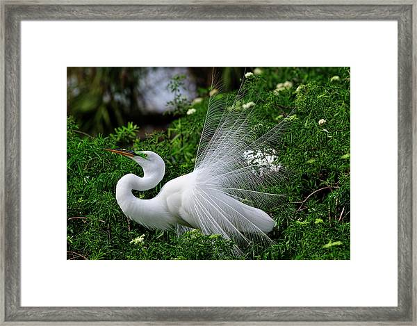 Brilliant Feathers Framed Print