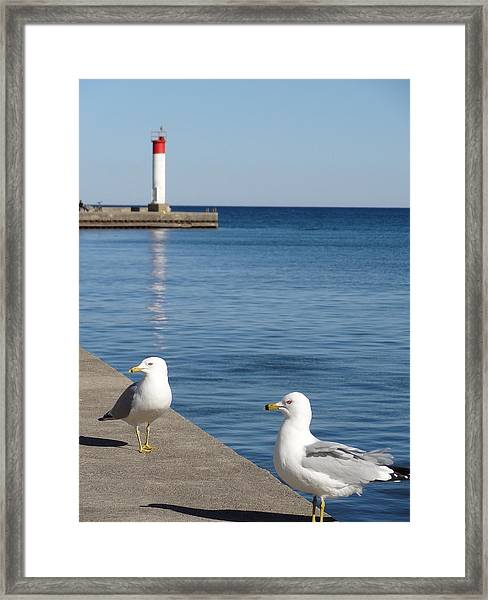 Bronte Lighthouse Gulls Framed Print