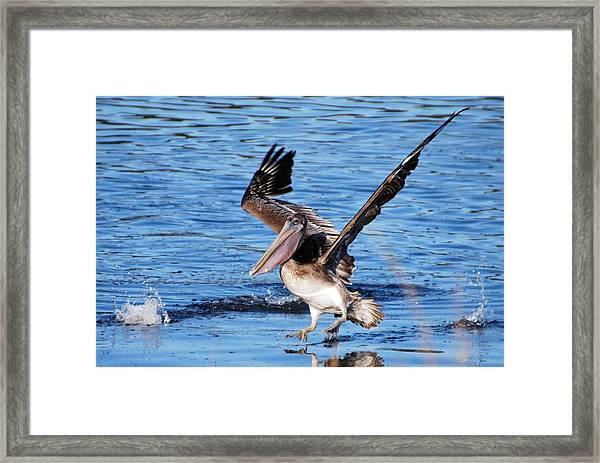 Brown Pelican Landing Framed Print