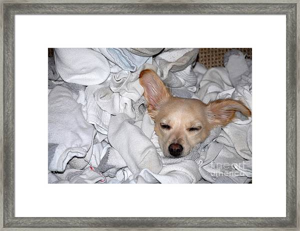 Buddy Socks Framed Print