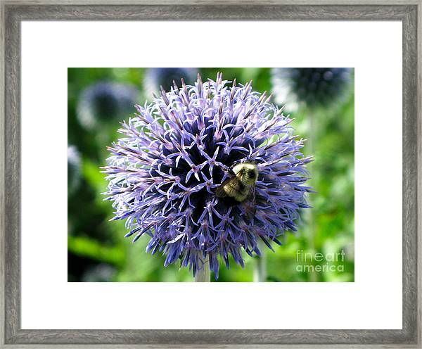 Busy As Me Framed Print