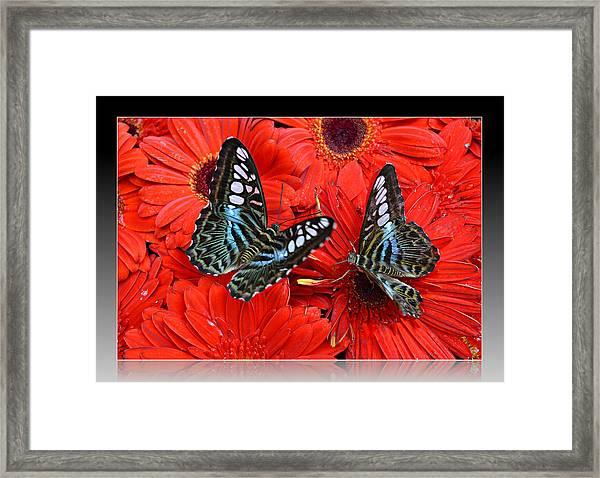 Butterflies On Red Flowers Framed Print
