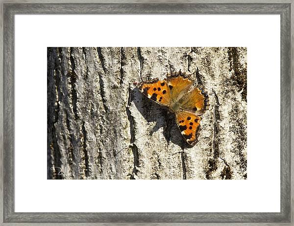 Butterfly 02 Framed Print