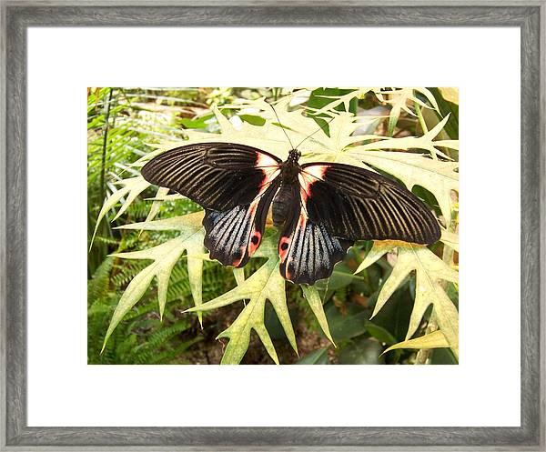 Butterfly Design Framed Print