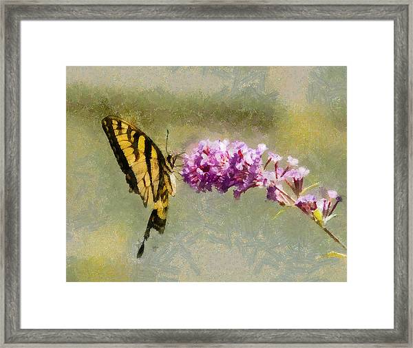 Butterfly Feast Framed Print