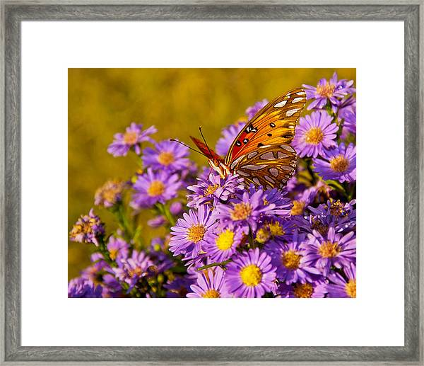 Framed Print featuring the photograph Butterfly by Francis Trudeau