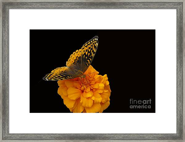 Butterfly Visitor Framed Print