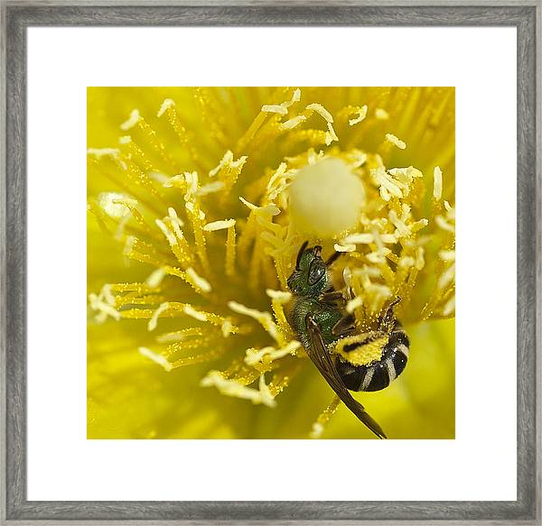 Cactus Flower And Bee Framed Print