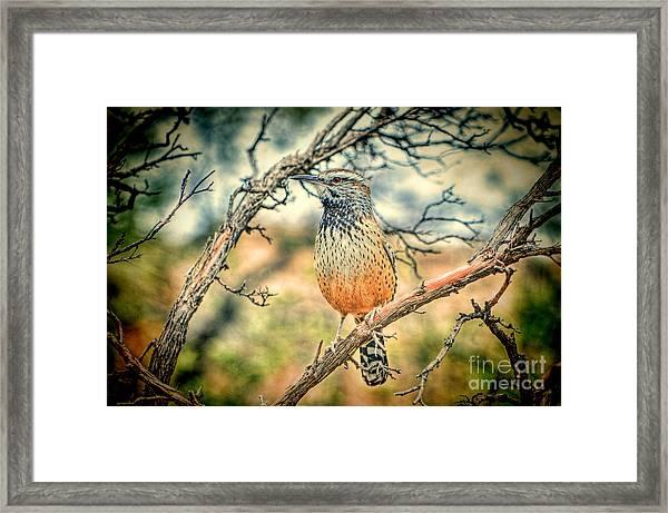 Cactus Wren Framed Print