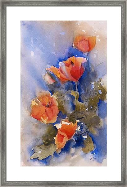 California Poppies Framed Print