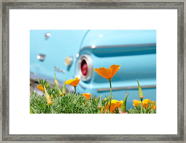 California Poppy Framed Print by Margaret Pitcher