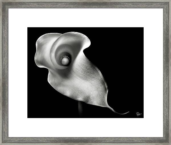 Calla Lily In Black And White Framed Print
