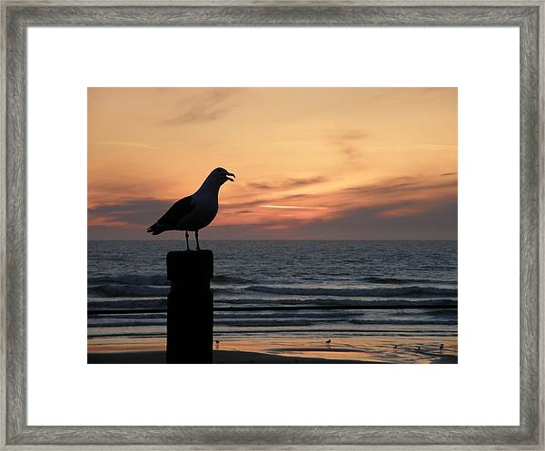 Calling To Friends Framed Print