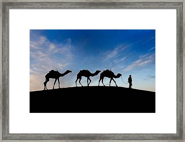Camels - 3 Framed Print
