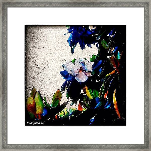 Canvas Magnolia Framed Print