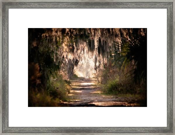 Capture Framed Print