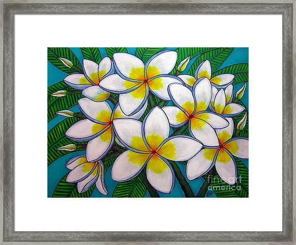 Caribbean Gems Framed Print