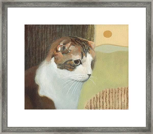 Cat And Sunset Framed Print