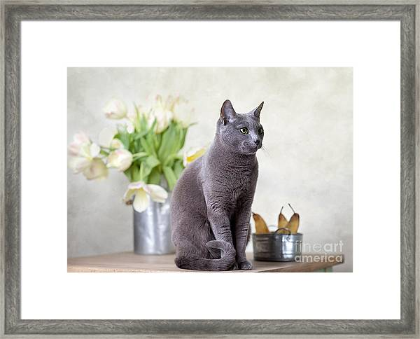 Cat And Tulips Framed Print