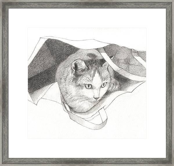 Cat In A Bag Framed Print