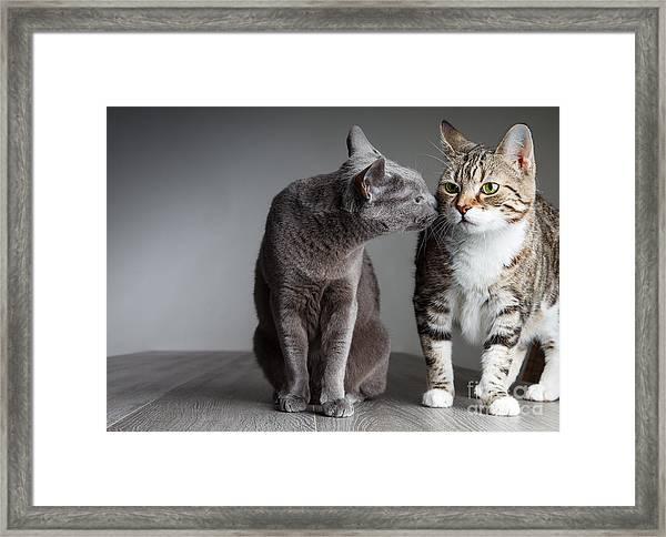 Cat Kiss Framed Print