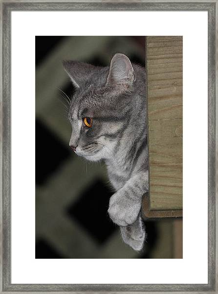 Cat On Steps Framed Print