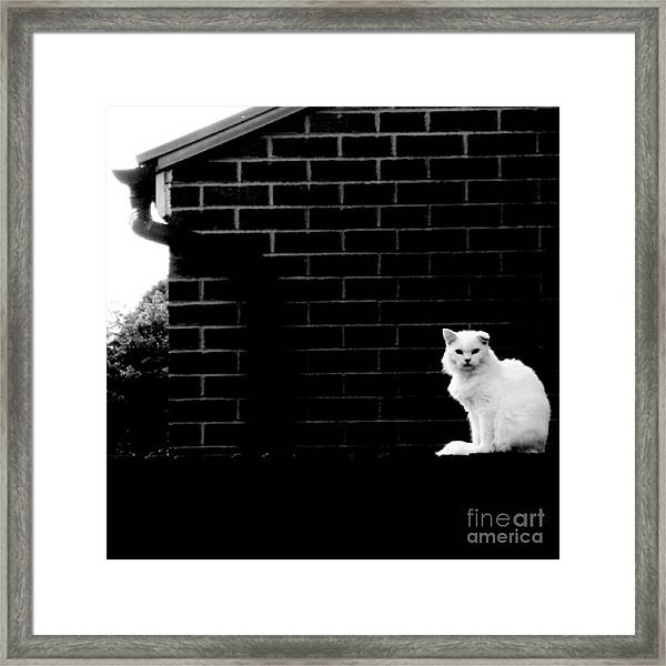 Cat With A Floppy Ear Framed Print