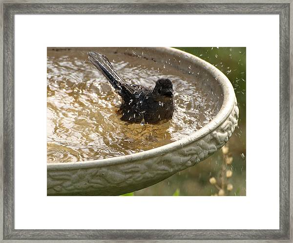 Catbird Bath - 2 Framed Print