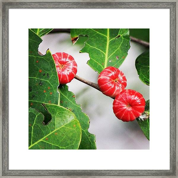 Catch Of The Camera, A Wild Flower Framed Print